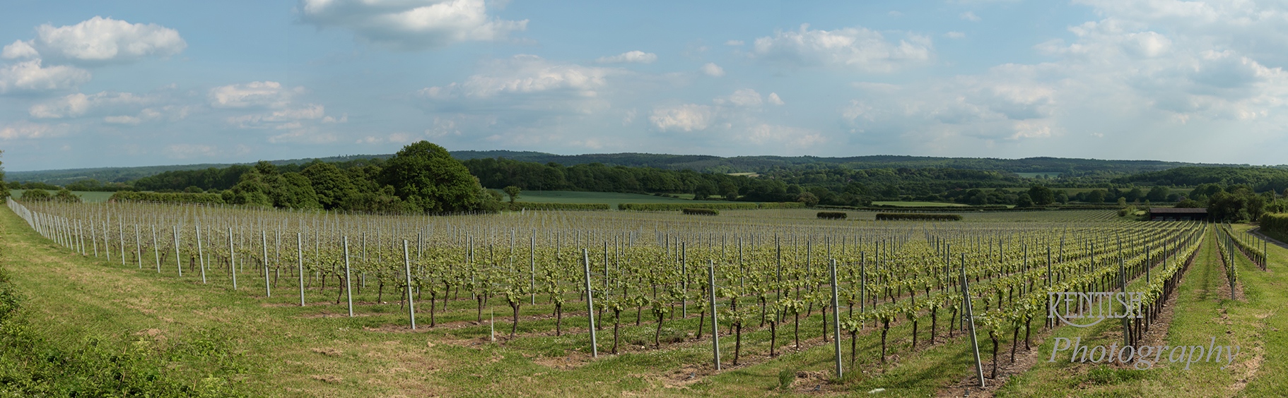 Westerham Vineyard